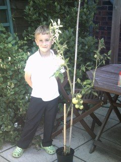 Issac and his prize tomato plant