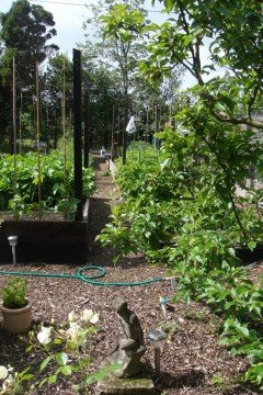 Tinsley House Clinic - Fruit and vegetable teaching garden